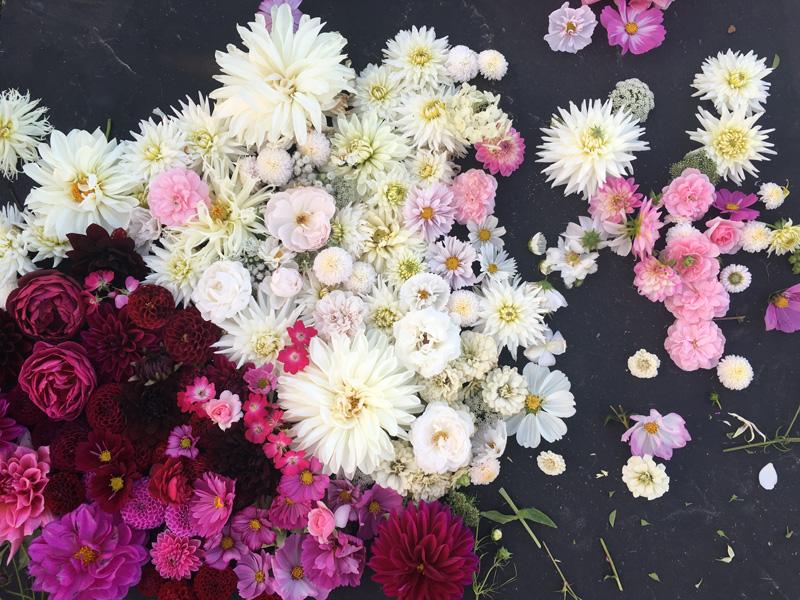 fiori_puscina